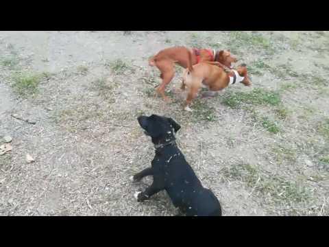Rissa generale tra cuccioloni, Cash si difende :-)