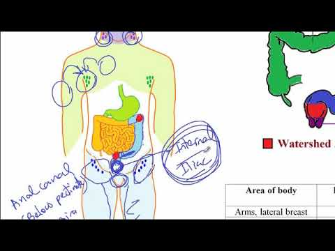 011   - Para-aortic Lymph Nodes And Venous Drainage Of Gonads - USMLE ACE INC