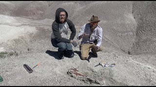 Chasing History: Triassic Fossils!