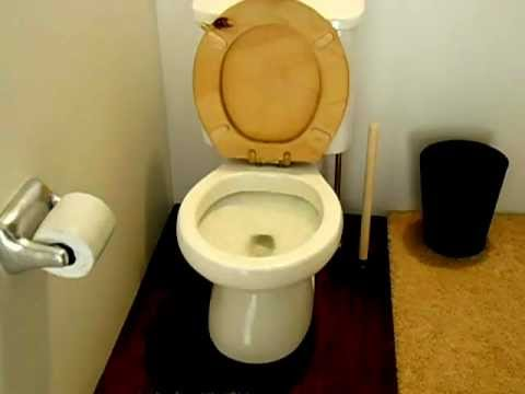 Miniature Toilet Fully Functional With Plunger Youtube