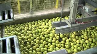 Современные технологии сортировки фруктов - фирма AWETA, фильм первый