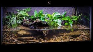 the-american-bullfrog-paludarium