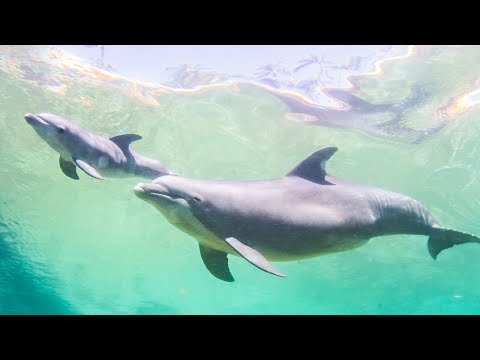 Dolphin Quest Hawaii Welcomes A Wonderful Baby Girl Dolphin!