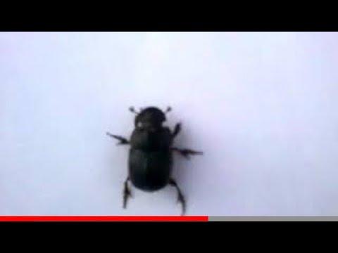 mecanismo-de-defensa-animal.