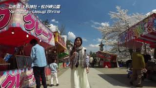 【日本の桜】山形県 上杉神社・松が岬公園