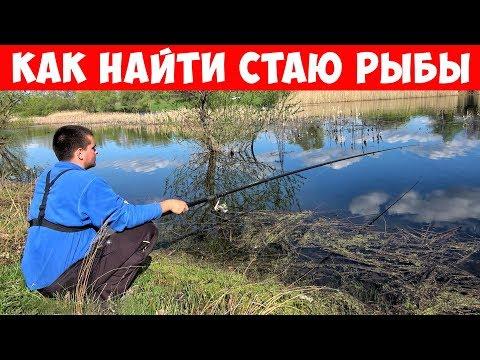 Как найти рыбу? РЫБАЛКА с ПОПЛАВКОМ на КАРАСЯ | Серия 1