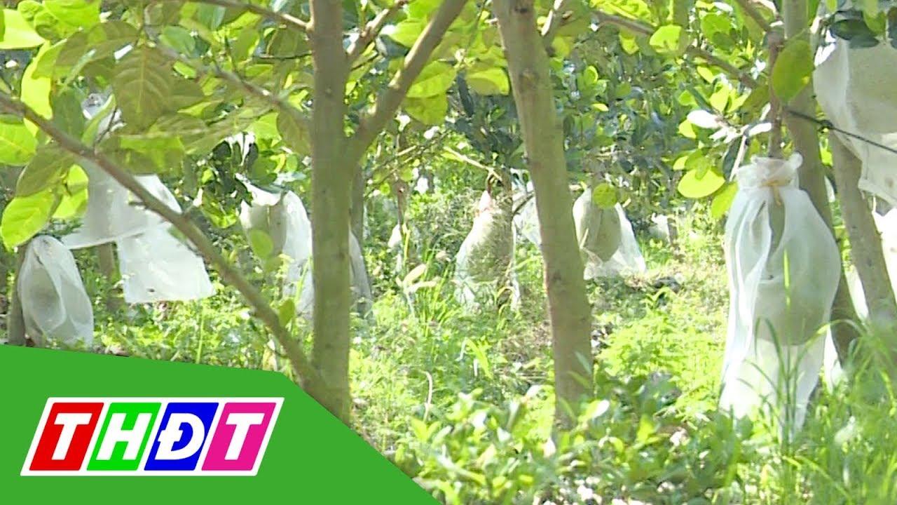 Để nông dân sống được với cây mít Thái | THDT
