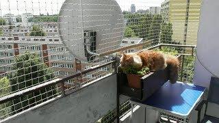 Кот Морфей изучает балконную свободу