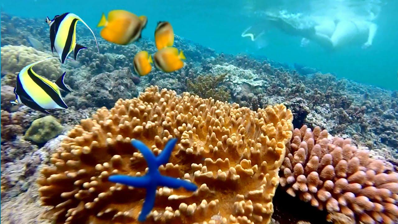Hasil gambar untuk AMED snorkeling