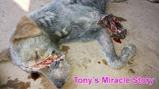 Dog rescued almost dead - watch what happened! thumbnail