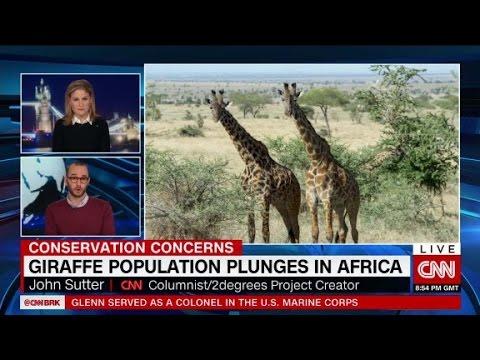 Giraffe population plunges in Africa