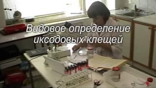 Неделя качества-2013 ОГАУ. Расчет степени биологических рисков(, 2013-11-12T10:54:54.000Z)