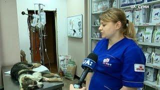 У Сумах на Хіммістечку отруїли собак