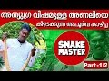 Vava Suresh with Dangerous & Aggresive Pregnant Russell's Viper  SNAKE MASTER 10-03-2016