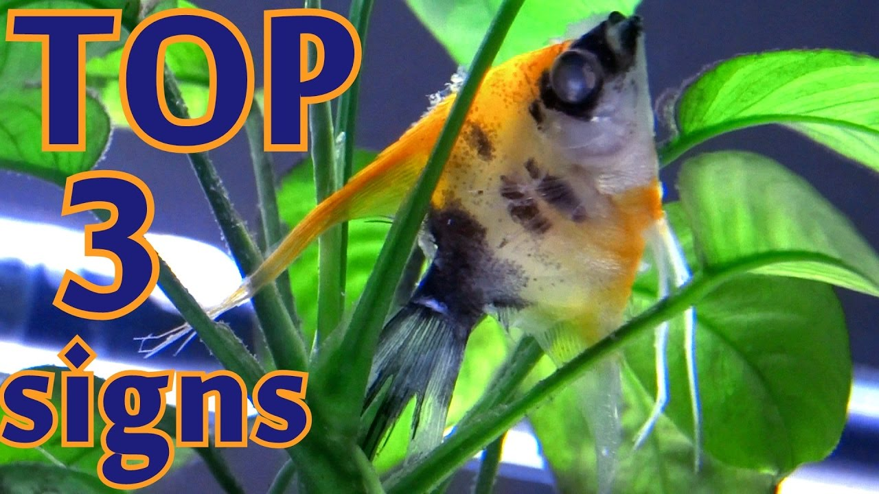 TOP 3 signs your fish is going to die - YouTube