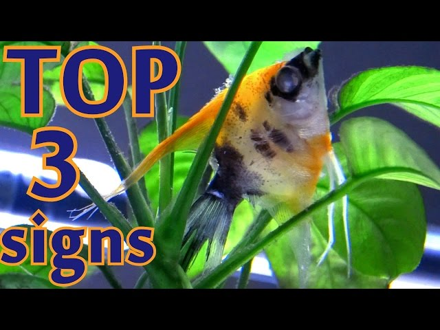 TOP 3 signs your fish is going to die