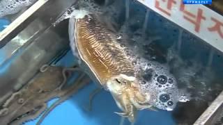 В Сеуле расположен один из самых крупных рыбных рынков Восточной Азии
