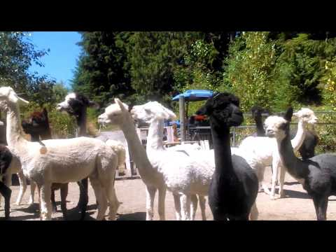 Paca Pride Guest Ranch,  Mountain Loop Highway (Granite Falls, WA) tour