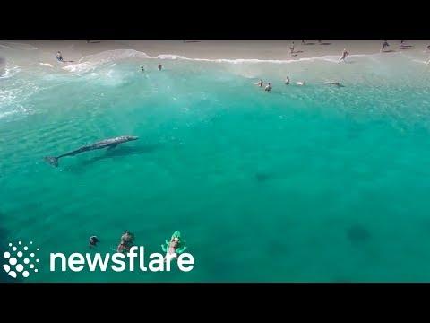 LOST WHALE AT LAGUNA BEACH