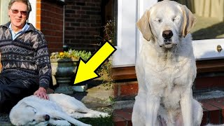 Пес-поводырь ослеп и не смог больше заботиться о хозяине, но то как поступил мужчина не ожидал никто