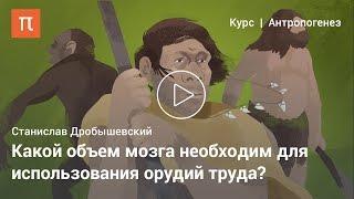 """""""Хоббиты"""", """"денисовцы"""" и другие — Станислав Дробышевский"""