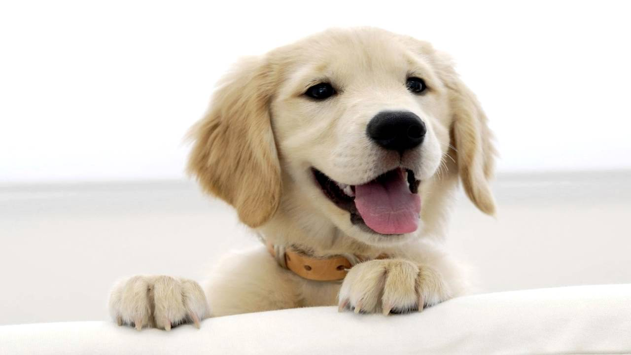 Dog Bark Sound Effects - YouTube Dogs Barking Audio Clips on barking dogs quotes, barking dogs sounds, barking dogs cartoons,
