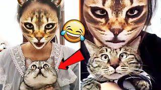 СМЕШНЫЕ ЖИВОТНЫЕ 2019 / ПРИКОЛЫ КОТЫ СОБАКИ, ЛУЧШИЕ ПРИКОЛЫ с Кошками и Собаками Funny Cats