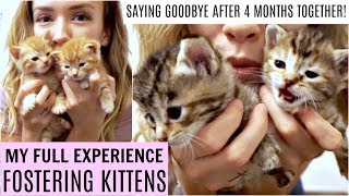 My Full Experience Fostering Kittens | Saying goodbye to my foster kittens!