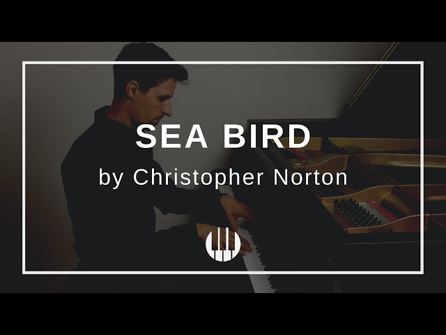 Sea Bird by Christopher Norton