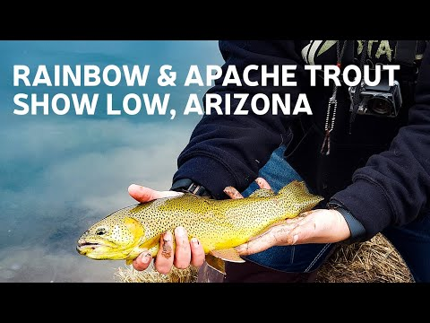 Trout Fishing Silver Creek in Show Low, Arizona