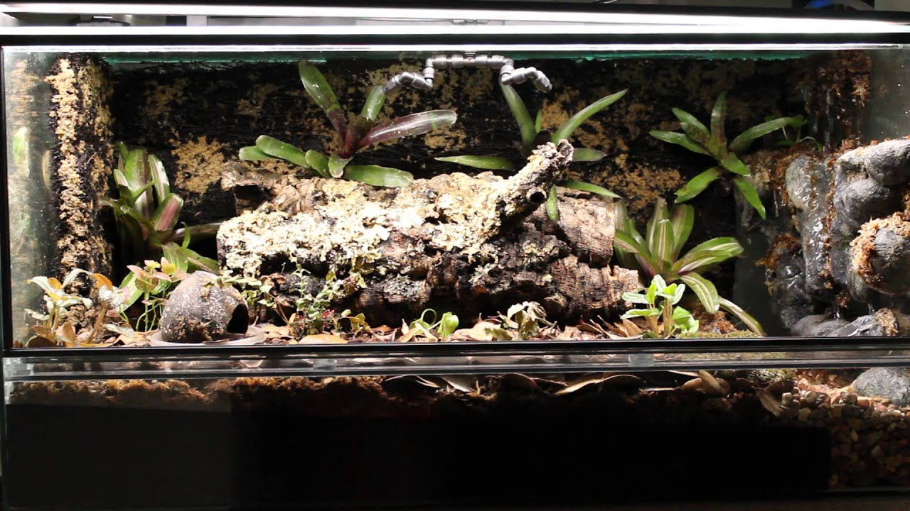Dart frog vivarium with lightning affects. - YouTube