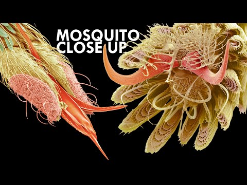 Mosquito: The Ultimate Killer