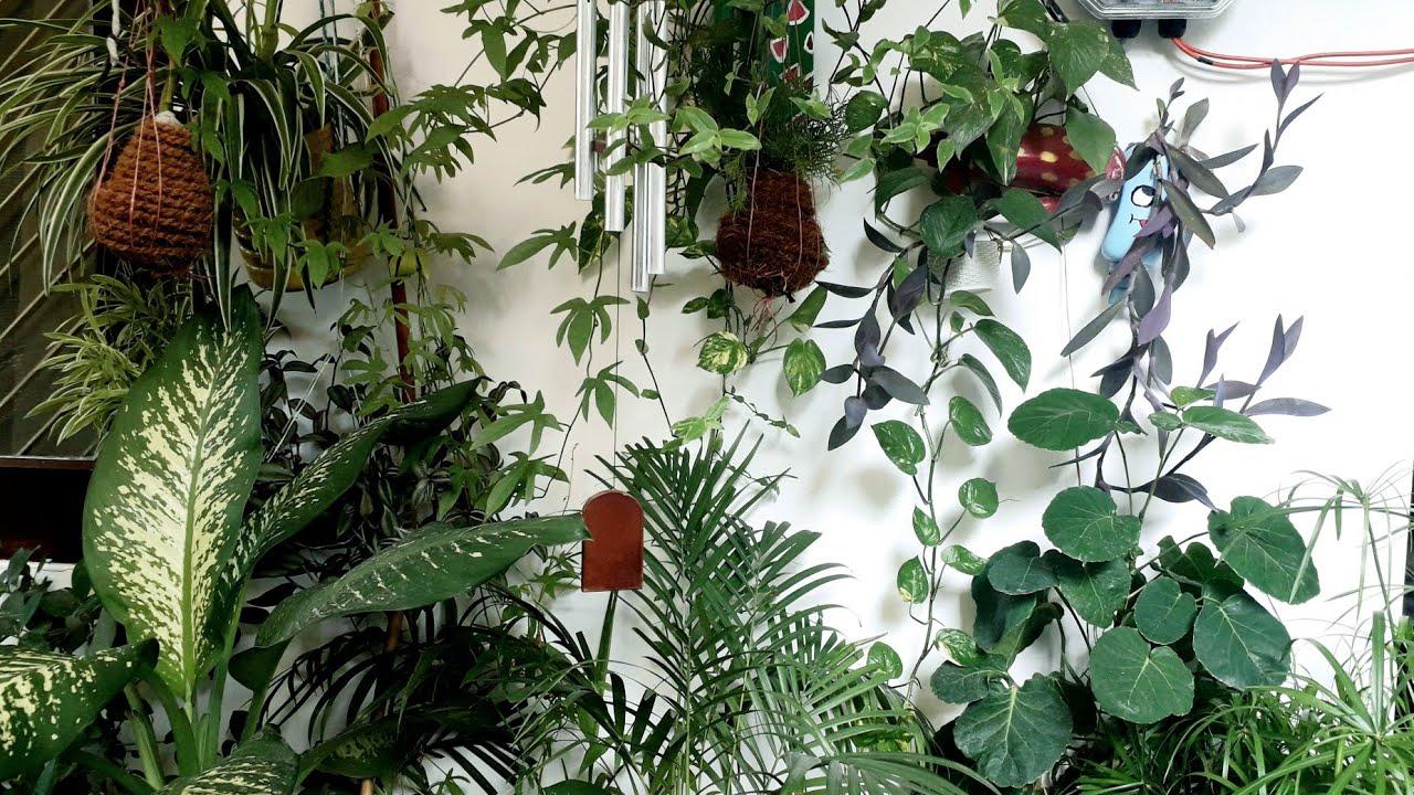 धूप नहीं आती है #Care_Tips My Shade Loving #Indoor_Plants Tour in Porch #Balcony Ground floor Hindi