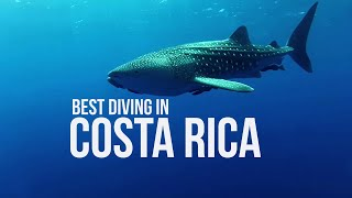 Perfect dive: sharks, mantas and whale shark in Costa Rica - Diving in Costa Rica