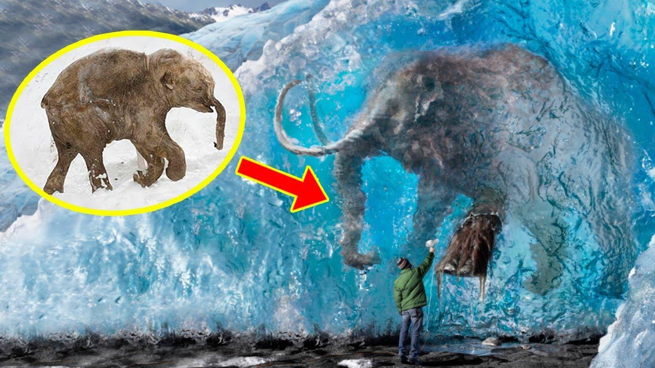 Download 5 FROZEN MAMMOTHS You Won't Believe Were Found ❄️