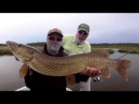 Pike Fishing At Saskatchewan's Minor Bay Lodge