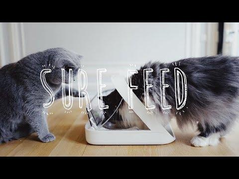 LES GAMELLES SUREFEED / Nourrir Deux Chats Avec Deux Alimentations Différentes