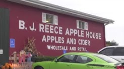 Fun Apple Picking at B.J. Reece Orchards You Pick Apples
