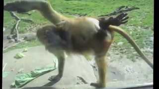 Приколы в зоопарке  дети и животные  Улетные видео-приколы. Смотреть всем!