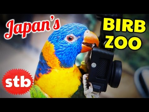 """BIRD ZOO"" Bird Cafe // Japanese Animal Cafe with SoloTravelBlog"