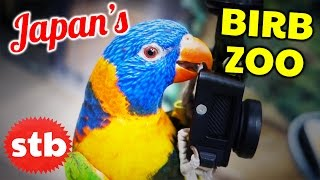 Birb Zoo with Hungry Birds // Japan Animal Cafe with SoloTravelBlog