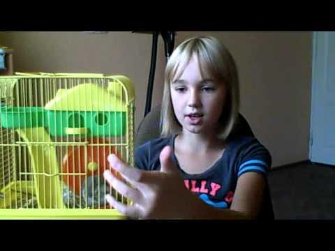 Игрушки для хомяка своими руками - YouTube