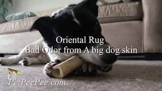 Oriental rug bad smell from a big dog