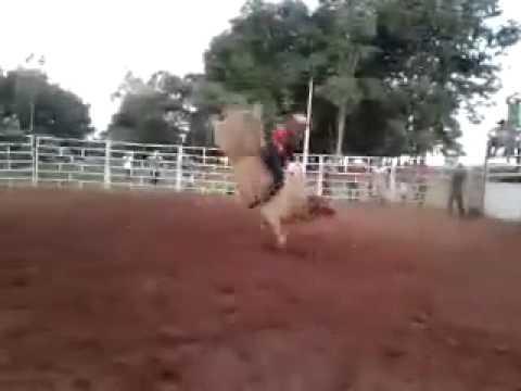 toro mata