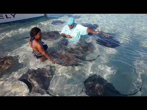 ON NAGE AVEC DES RAIES ET DES REQUINS CITRONS (Grand Bahama