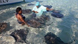 ON NAGE AVEC DES RAIES ET DES REQUINS CITRONS (Grand Bahama - Bahamas)