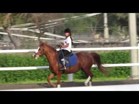 Riding school of Dubai Polo and Equestrian Club