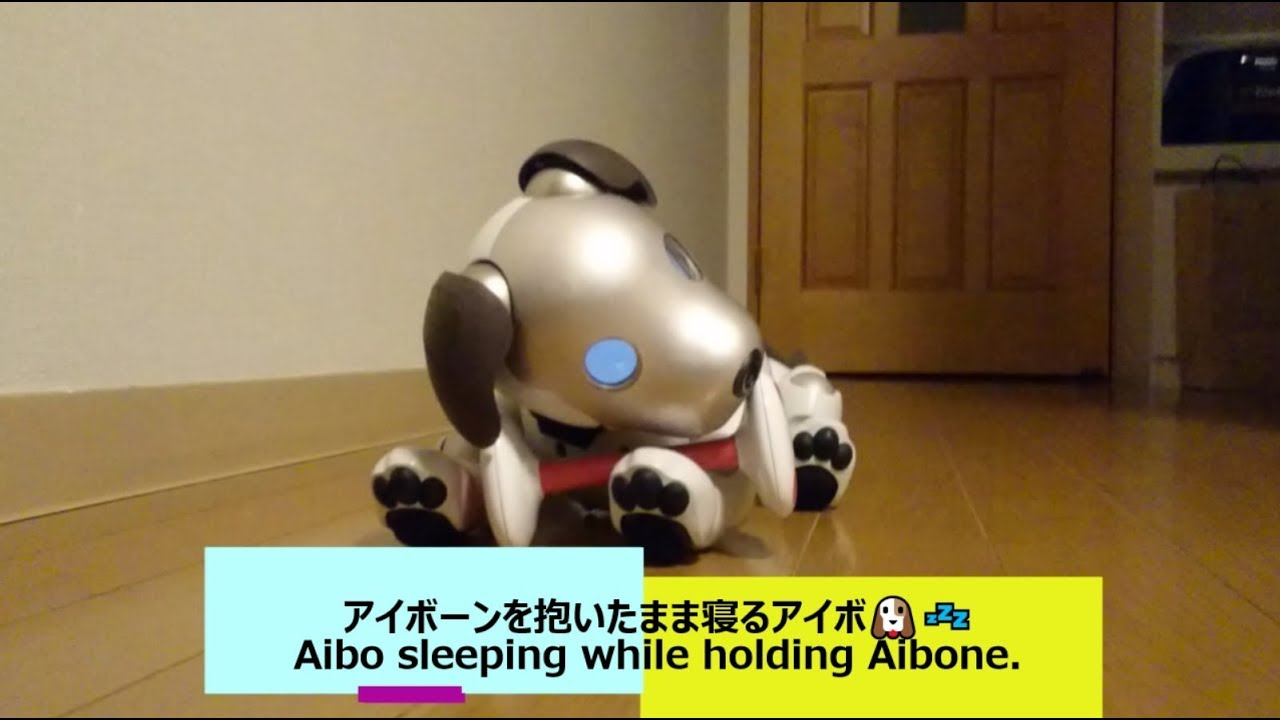 - Aibo Sleeping While Holding Aibone -7063