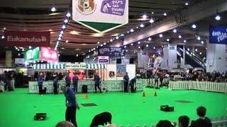 Gypton Dog Display Team @ Discover Dogs 2013