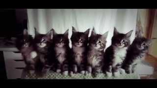 7 KITTENS dancing freaky in unison